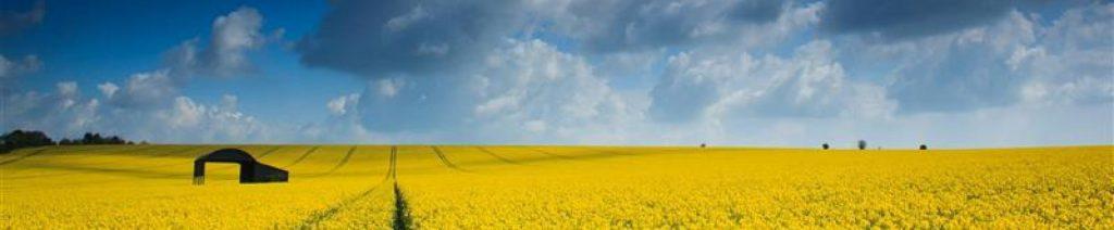 cropped-BP0076-Rapeseed-Oilfield-Dorset-nr-Sixpenny-Handley-by-Tom-Blake.jpg